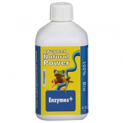 Enzymes+