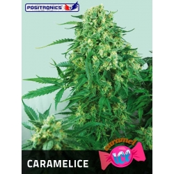 CARAMELICE 100%
