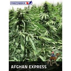 AFGAN EXPRESS AUTOFLORACION 100%