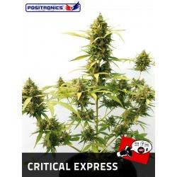 CRITICAL EXPRESS AUTOFLORACIÓN 100%