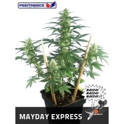 MAY DAY EXPRESS AUTOFLORACION 100%