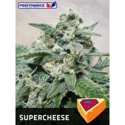 SUPER CHEESE 100%