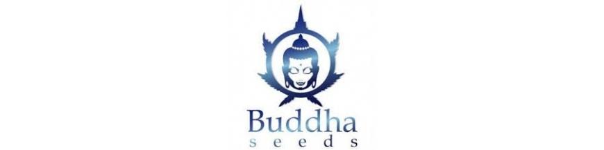 BUDDA SEEDS BANK