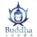BUDDA SEEDS BANK