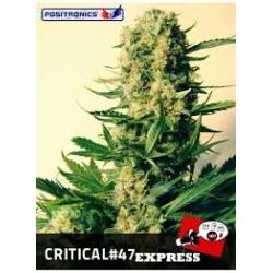 CRITICAL47 EXPRESS AUTOMATICA