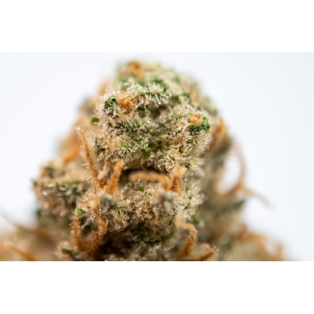 Flores ¡CBD LIFE Strawberry Cake