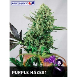 PURPLE HAZE 1 100%