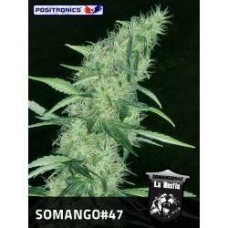 SOMANGO 47 100%